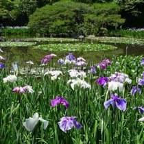 初夏、京都の花めぐり