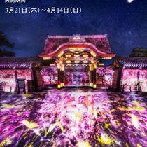 二条城桜まつり 2019