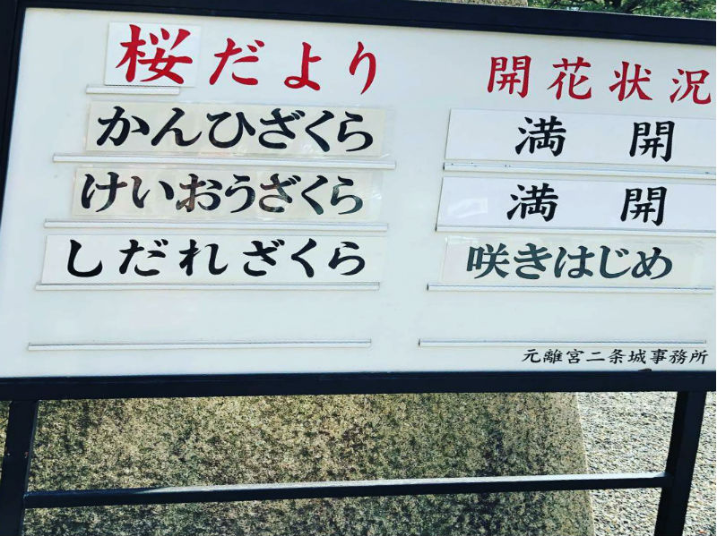 https://www.usagi-yado.com/blog/assets_c/20190325_1.jpg